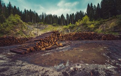 Behind the Surge in Lumber Prices
